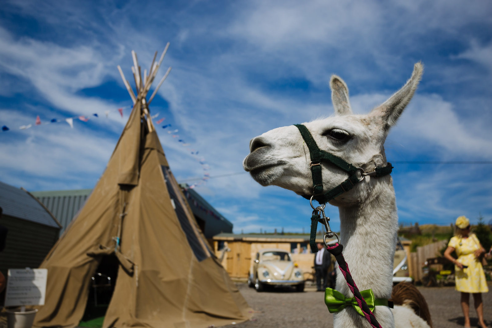Wellbeing Farm tipi and llama